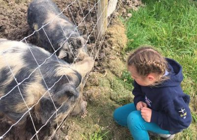 Girl looking at the friendly pigs at Mesmear, self catering holiday accommodation Polzeath Cornwall